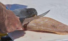 Fisherman filleting fish Royalty Free Stock Photography