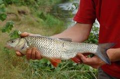 Fisherman and a fish Royalty Free Stock Photos