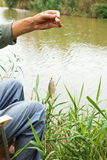 Fisherman fished out small redeye fish Royalty Free Stock Photography