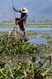 Fisherman fishing with net. On inle lake -myanmar royalty free stock photo