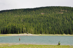 Fisherman fishing in the river on the background of spruce forests stock photography