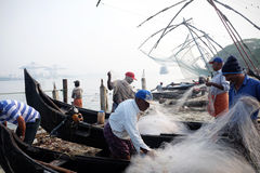 Fisherman with `frog` fish, Fort Kochi. chinese net. royalty free stock photo