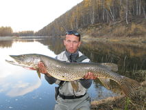 Fisherman with giant pike. Fisherman with pike in Mongolia (Esox reichertii Royalty Free Stock Photos