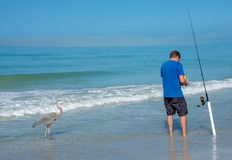 Fisherman and grey heron on seashore Stock Image