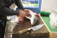 Fisherman guts a fish in Japan. A fisherman uses a knife to gutt a fish in Japan Royalty Free Stock Photos