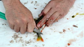 Fisherman hand with knife clean bass perch fish scale stock footage