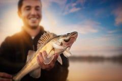 Fisherman. Happy angler with zander fishing trophy Stock Photos