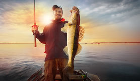 Fisherman. Happy angler with zander fishing trophy Royalty Free Stock Photography