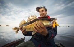 Fisherman. Happy angler with zander fishing trophy royalty free stock image