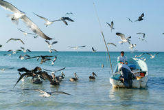 Fisherman on his boat at the beach of Holbox island Royalty Free Stock Image