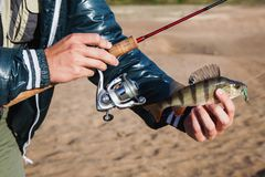 Fisherman holding a bass in his hand and spinning the coil. Fish caught on jig lure. Ultralight spinning Stock Photos