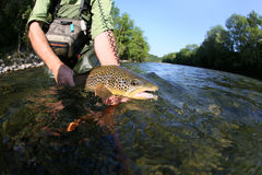 Fisherman holding brown trout Royalty Free Stock Images