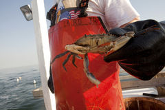 A fisherman holding a crab stock images