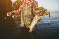 The fisherman is holding a fish pike caught on a hook. In a freshwater pond stock photography