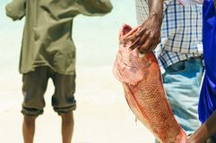 Fisherman is holding a fresh fish red snapper. On the shore ocean Royalty Free Stock Photo