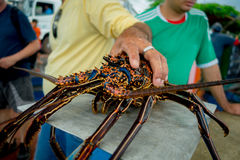 Fisherman holding fresh lobsters of santa cruz in market seafood photographed in fish market, galapagos.  stock photos