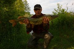Pike. Fisherman holding in his hands big pike Stock Photo