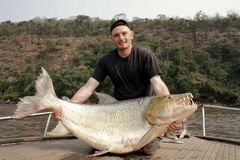 Fisherman holding a huge Goliath Tigerfish Stock Images