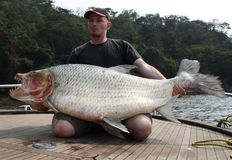 Fisherman holding a huge Goliath Tigerfish stock image