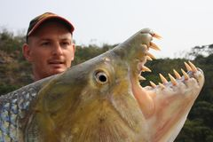 Fisherman holding a huge Goliath Tigerfish royalty free stock photo
