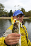 Fisherman Holding Northern Pike Royalty Free Stock Image