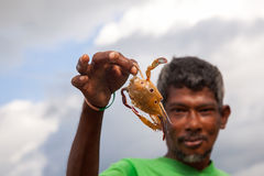 Fisherman holding raw crab in hand. Beruwala, Sri Lanka - November 16 : Local fisherman holding raw crab he caught in hand on Novenber  16, 2015 in Beruwala, Sri Royalty Free Stock Photo
