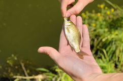 Fisherman holding a small fish Royalty Free Stock Images