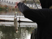 Man holding fish on line. Man in hoodie holding fishing pole with fish on line next to lake or river Stock Photography