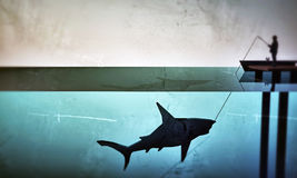 Fisherman hunting a big shark Stock Photography