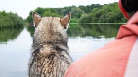 The fisherman with the husky dog in a boat back view stock video footage