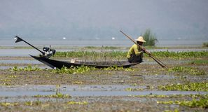 Traditional Shan fisherman in central Myanmar royalty free stock photography