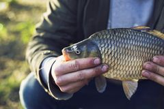 Fisherman on the lake caught a carp.vacation fishing concept royalty free stock photo