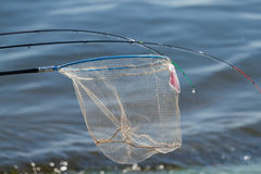 Fisherman and landing net Stock Photos