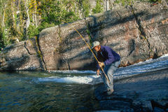 Fisherman Landing a Trout High Mountain Stream Stock Photography