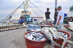 Fisherman are landing tuna from fishing boat at the seaport Stock Photos
