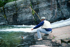 Fisherman Landing a Yellowstone Cutthroat in a Clear Mountain St Stock Photo