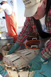 Fisherman lidding the crab pot Stock Photo
