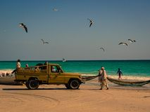 Fisherman in Oman and the seagulls royalty free stock photos