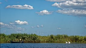 Fisherman and pelicans on Danube delta. A fisherman in his boat with pelicans on the river at Danube delta in Romania royalty free stock image