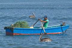 Fisherman and Peruvian Pelicans Royalty Free Stock Photography