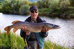 Fisherman with pike fish. On the shore of river Uur in northern Mongolia Stock Image