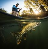 Fisherman and pike, underwater view. stock image