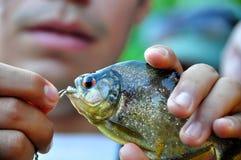 Fisherman and a piranha. Peruvian fisherman with a piranha Royalty Free Stock Photo
