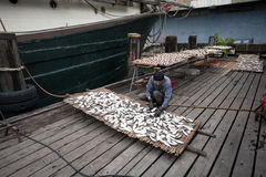 Fisherman prepares fish for drying in the fishing port in Macau Royalty Free Stock Photography