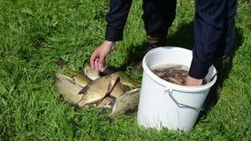 Fisherman pull fish stock footage