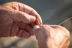 Fisherman puts bait on a fishing rod hook Stock Photography