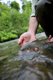 Fisherman with recently caught brown trout Royalty Free Stock Image