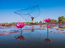 Fisherman and Red Lotus Stock Photos