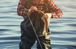 The fisherman in the red shirt is holding a fish Zander caught on a hook. In a freshwater pond Stock Photos