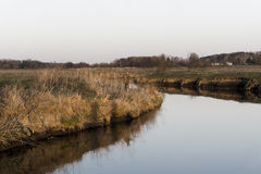 Fisherman in the reeds Royalty Free Stock Photography